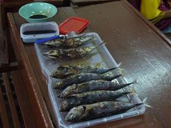 Good_fish